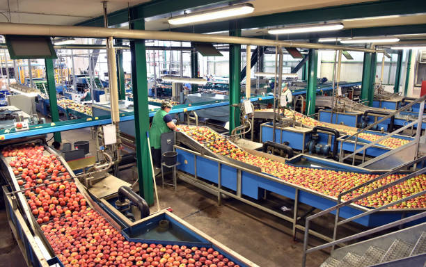 transport of freshly harvested apples in a food factory for sale stock photo