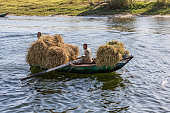 Farmers transporting their cattle feed in a row boat on the nile river, near Luxor, Egypt.