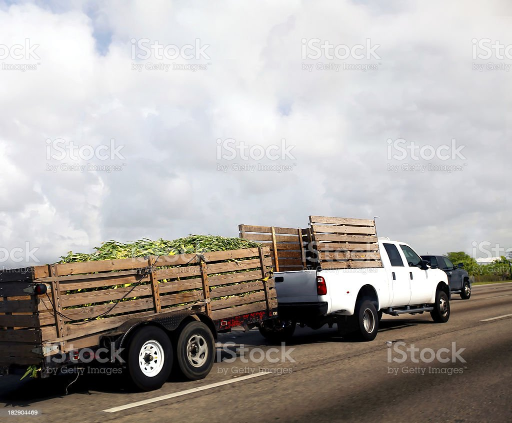transporting a crop of corn royalty-free stock photo