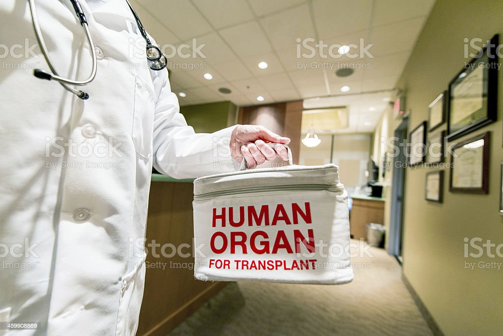 Transporting a Human Organ for Transplant royalty-free stock photo