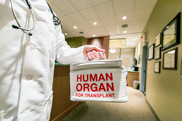 Transporting a Human Organ for Transplant stock photo
