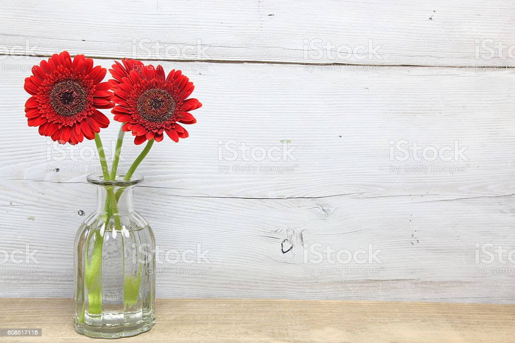 Transvaal daisy in a wooden background stock photo