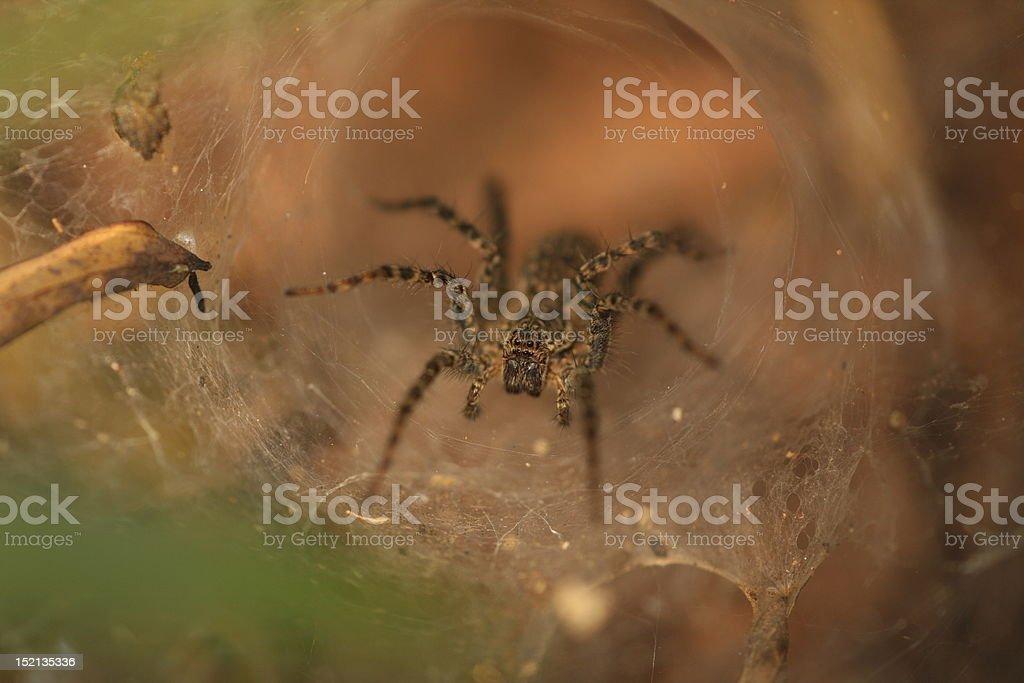 Trap door spider stock photo
