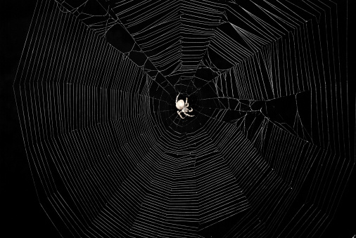 A beautiful closeup of a spider liwing in the swamp. Spaider nets in wetlands in an early morning in Latvia, Northern Europe.