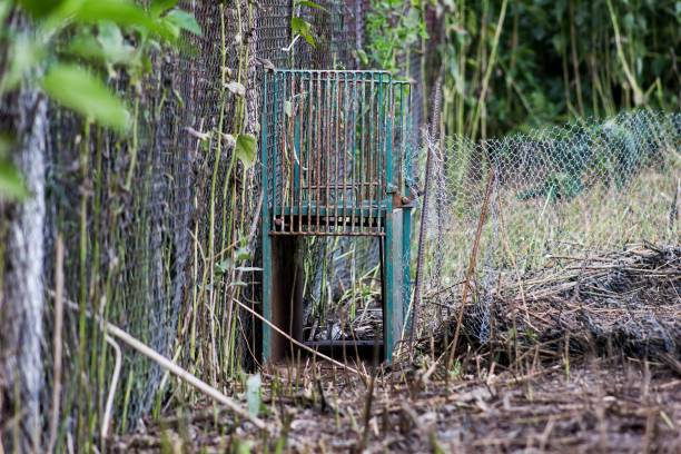 A trap to catch foxes in the natural environment stock photo