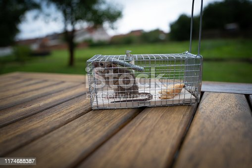 Live-trap for mice stock photo