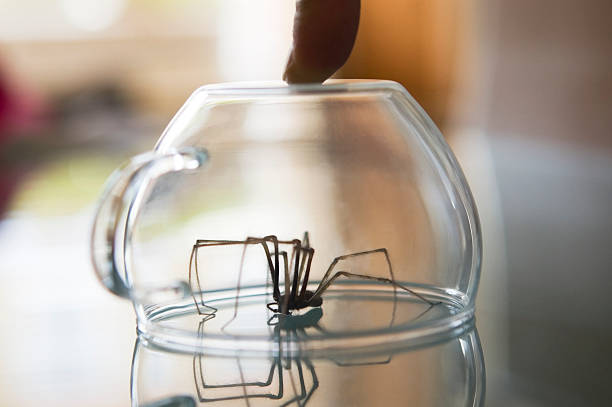 Trapped spider stock photo