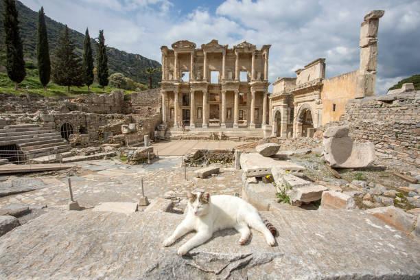 Travel concept photo; Turkey / Izmir / Selcuk Ephesus ancient city and cats Travel concept photo; Turkey / Izmir / Selcuk Ephesus ancient city and cats ephesus stock pictures, royalty-free photos & images