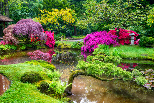 Travel Concepts. Amazing Picturesque Scenery of Japanese Garden in the Hague (Den Haag) in the Netherlands Straight After the Rain. Horizontal Image Composition