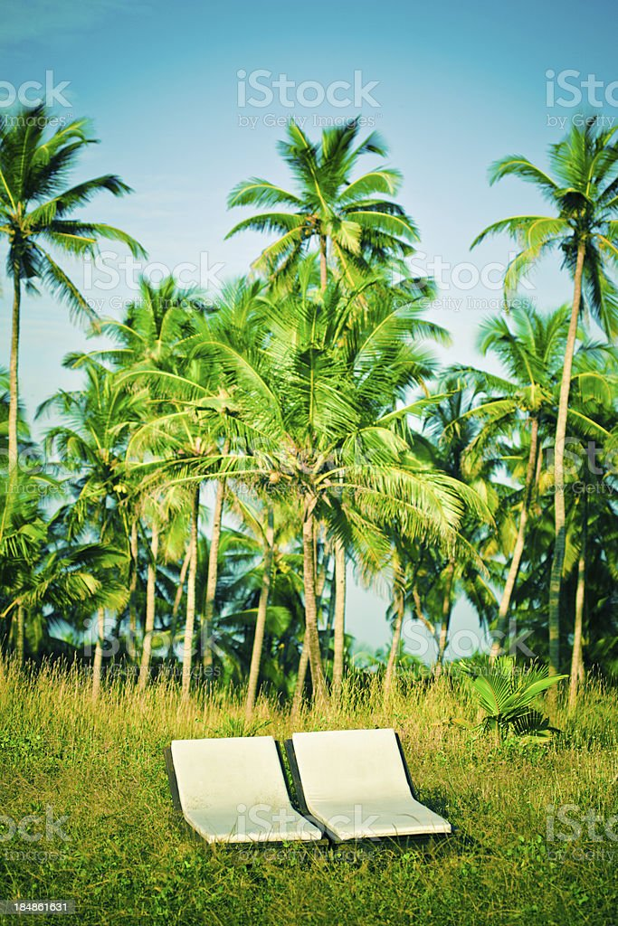 Travel destination A pair of white deck chairs in front of idyllic coconut palm grove, Old Goa in India. Asia Stock Photo