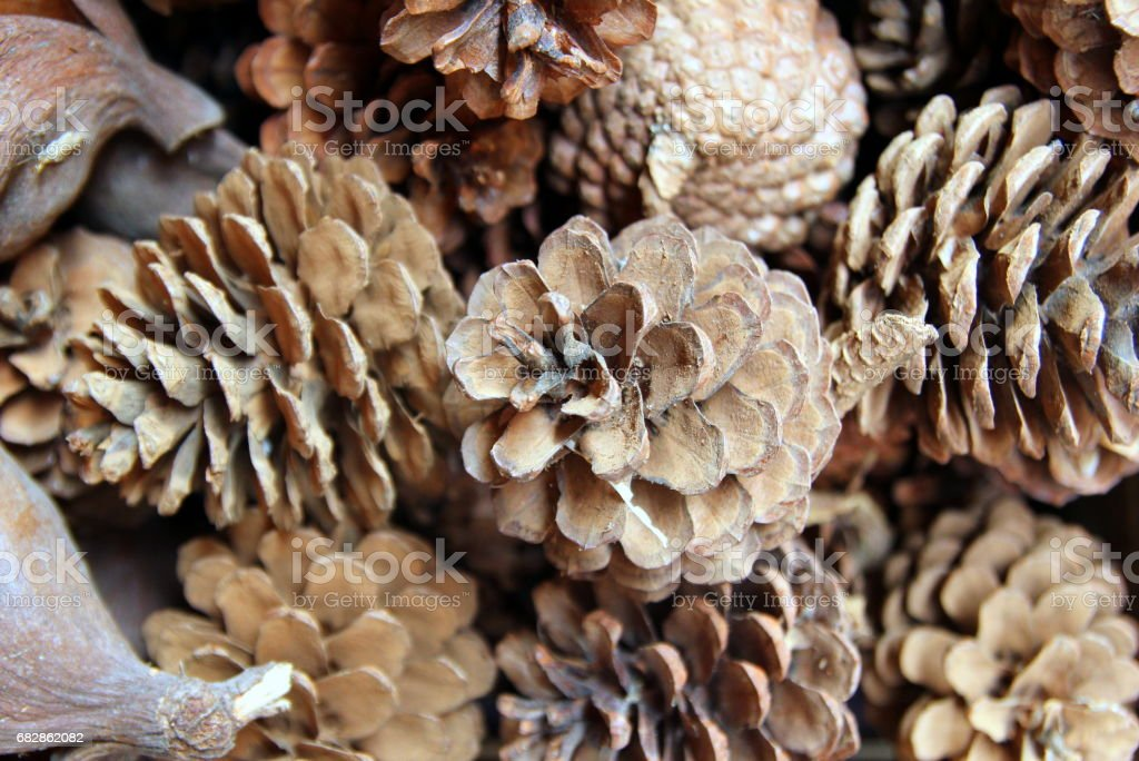 Travel to Bangkok, Thailand. The pine cones on the flower market. royalty-free stock photo