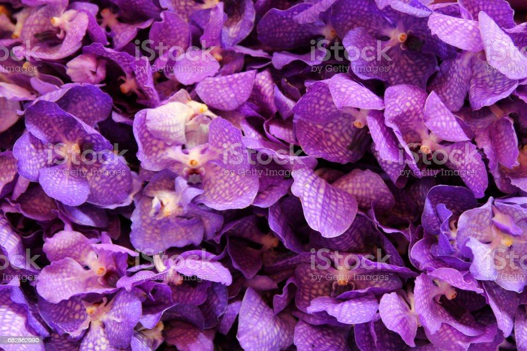 Reisen Sie nach Bangkok, Thailand. Die lila Orhids in den Sträußen auf dem Blumenmarkt. Lizenzfreies stock-foto