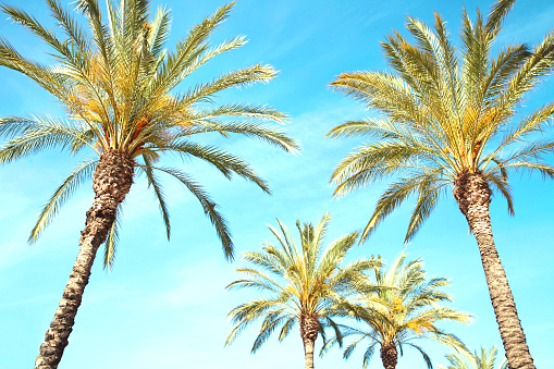 Foto de Viagens Turismo Férias Natureza E Verão Conceito De Férias Palm Fundo De Árvores O Azul Do Céu e mais fotos de stock de Azul