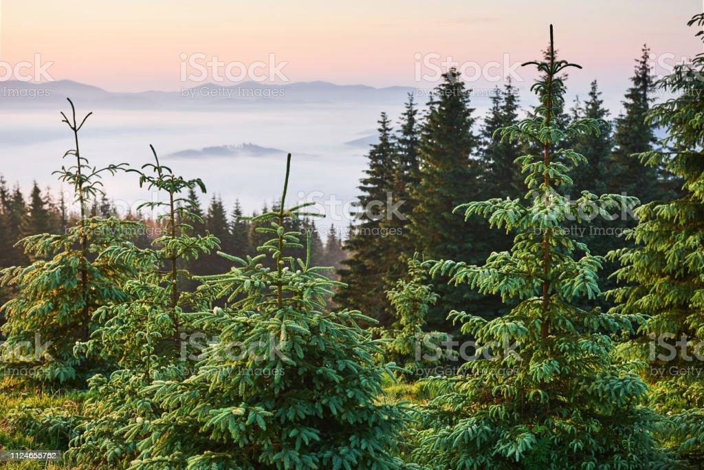 Travel, trekking. Summer landscape - mountains, green grass, trees...