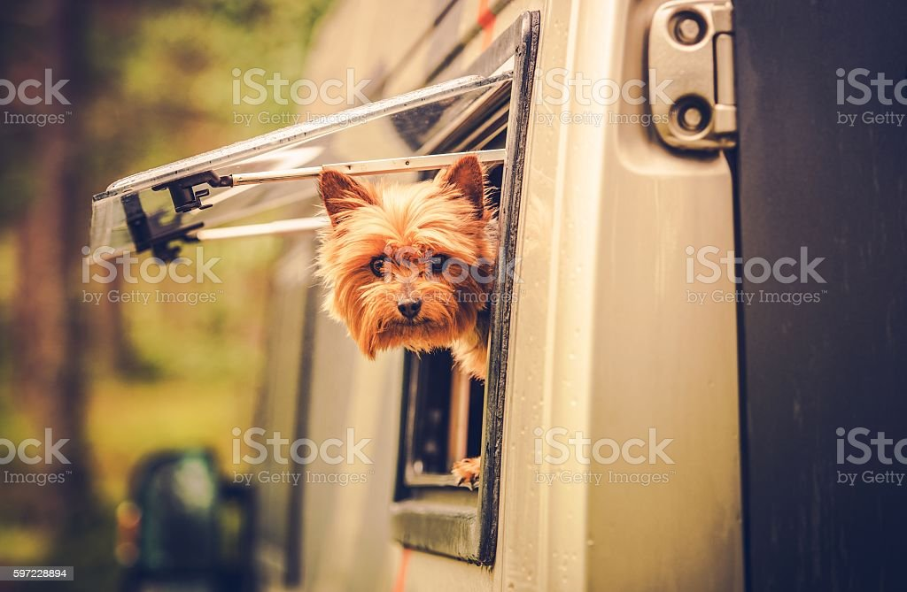 RV Travel with Dog stock photo