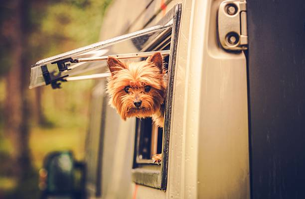 rv travel with dog - motorhome stock photos and pictures