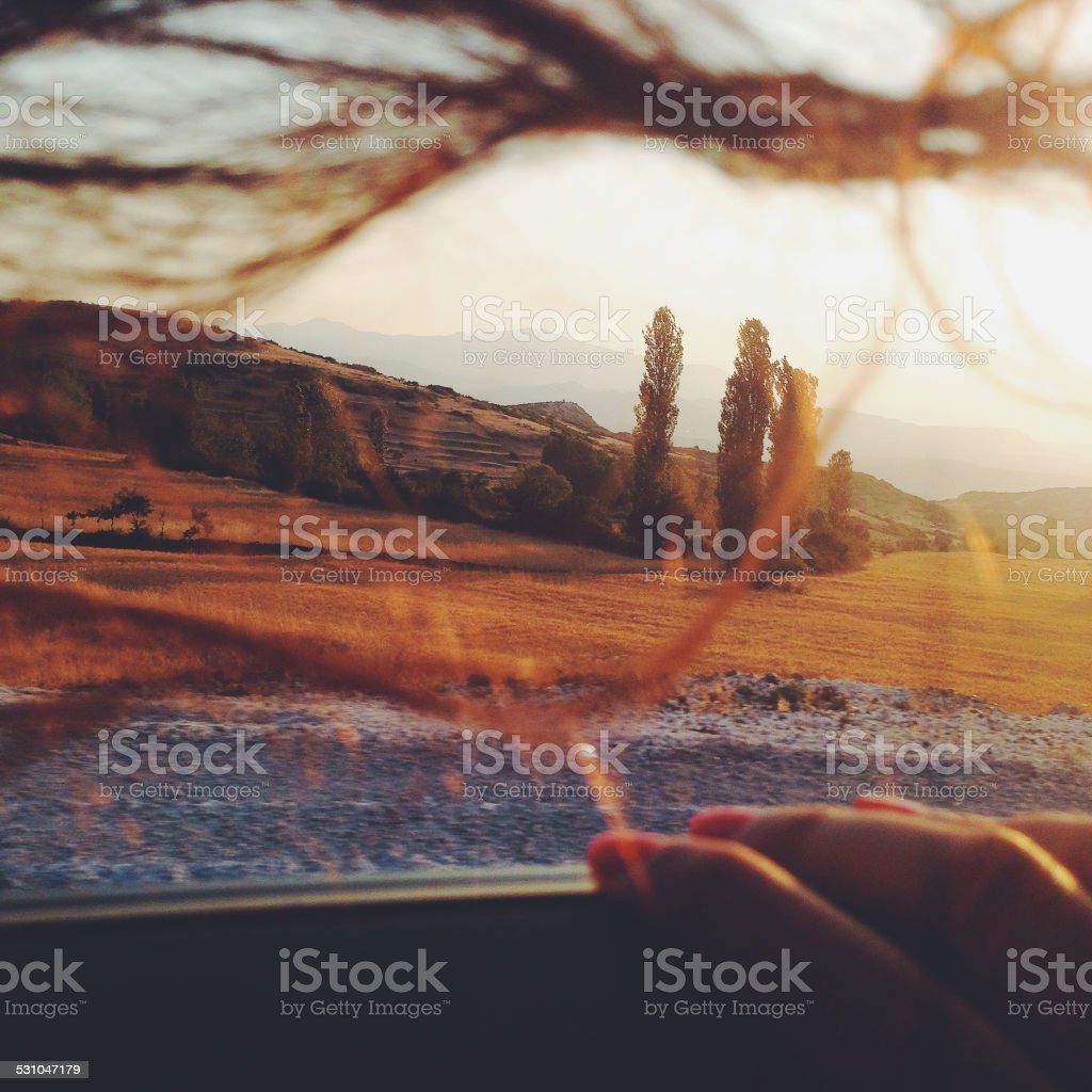 Traveler looking at yellow field royalty-free stock photo
