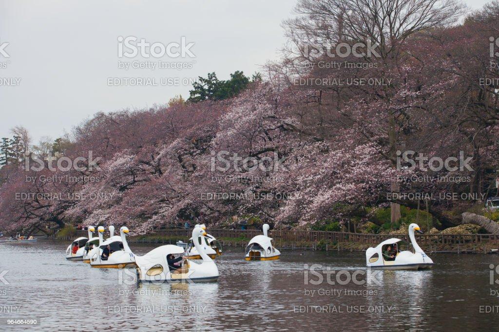 Traveler ride the Swan boat on the Inokashira Pond royalty-free stock photo
