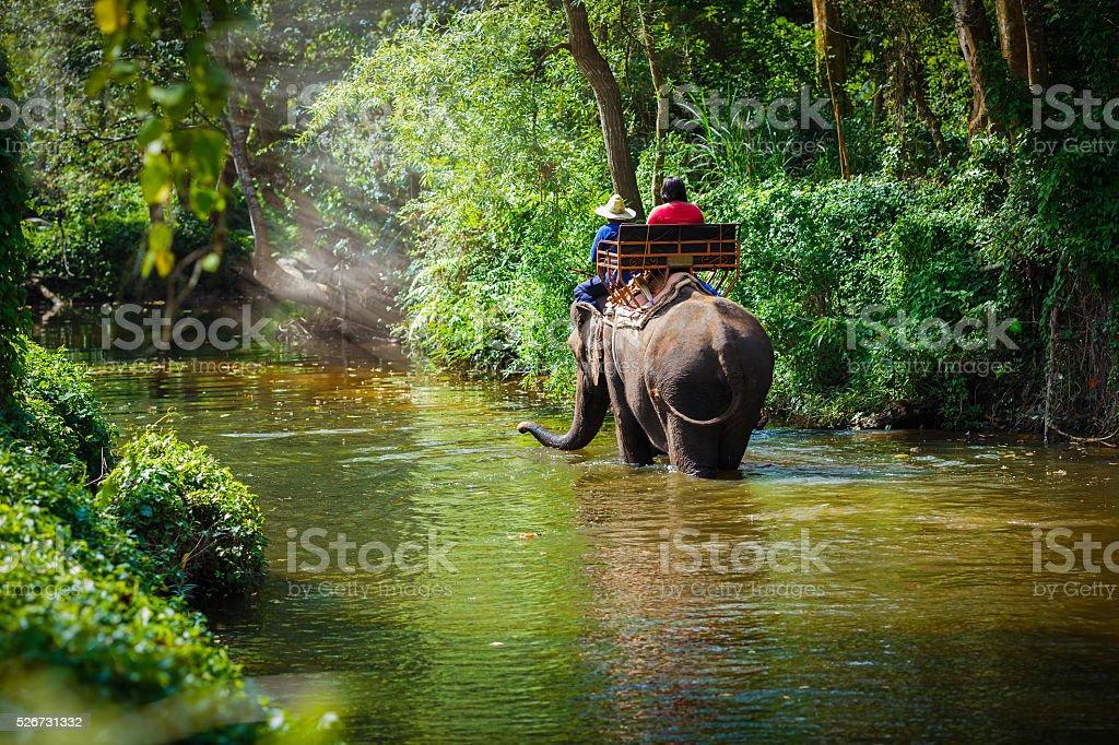 Traveler riding on elephants Traveler riding on elephants Trekking in Thailand Adventure Stock Photo