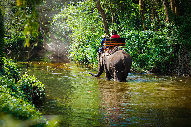 Traveler riding on elephants 스톡 사진