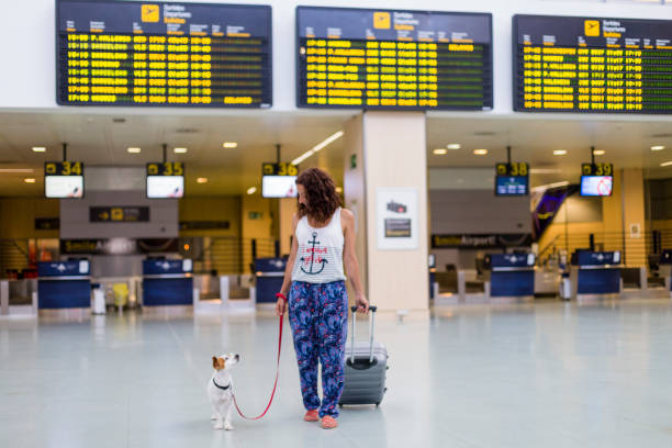 traveler woman and her dog walking by the airport. information screens background. travel and transportation with technology concept. stock photo