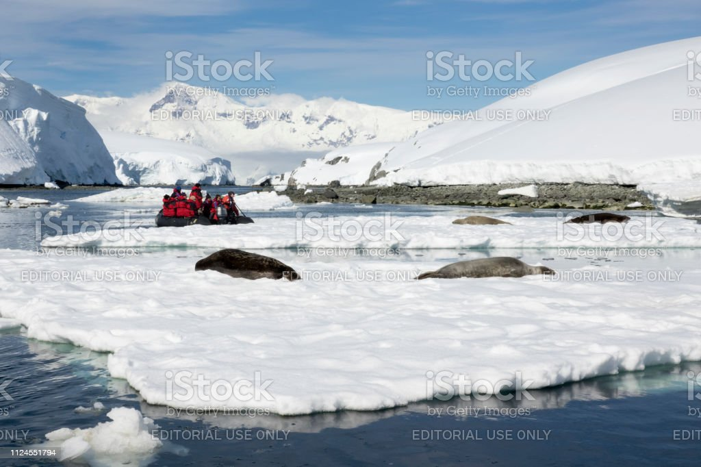 Travelers watch weddell seals relax Dallmann Bay ice Melchior Islands Anvers Island mountain glaciers Antarctica stock photo