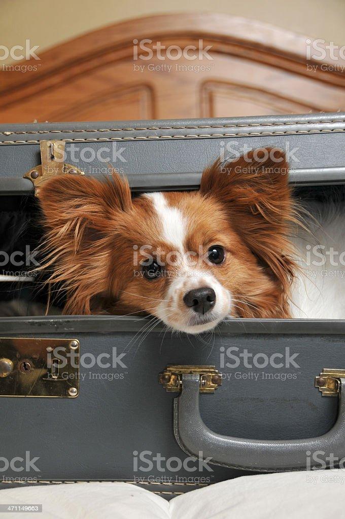 Traveling Companion royalty-free stock photo