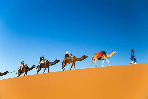 viaje de camellos - camello fotografías e imágenes de stock
