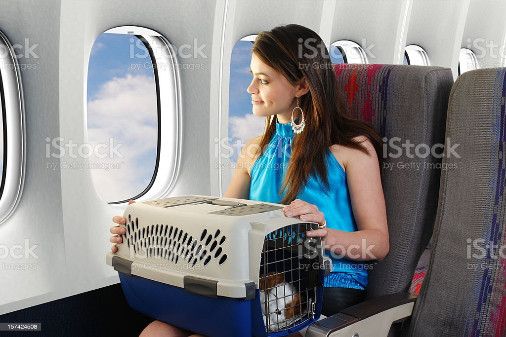 Traveling With A Pet stock photo