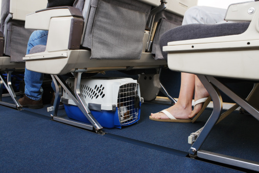 Passenger traveling with their pet dog.  Pet carrier is stowed under the seat.