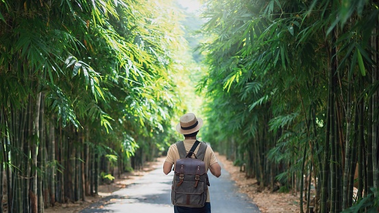 Traveller man standing at bamboo forest with walk way in nature background.Beautiful landscape for adventure travel.