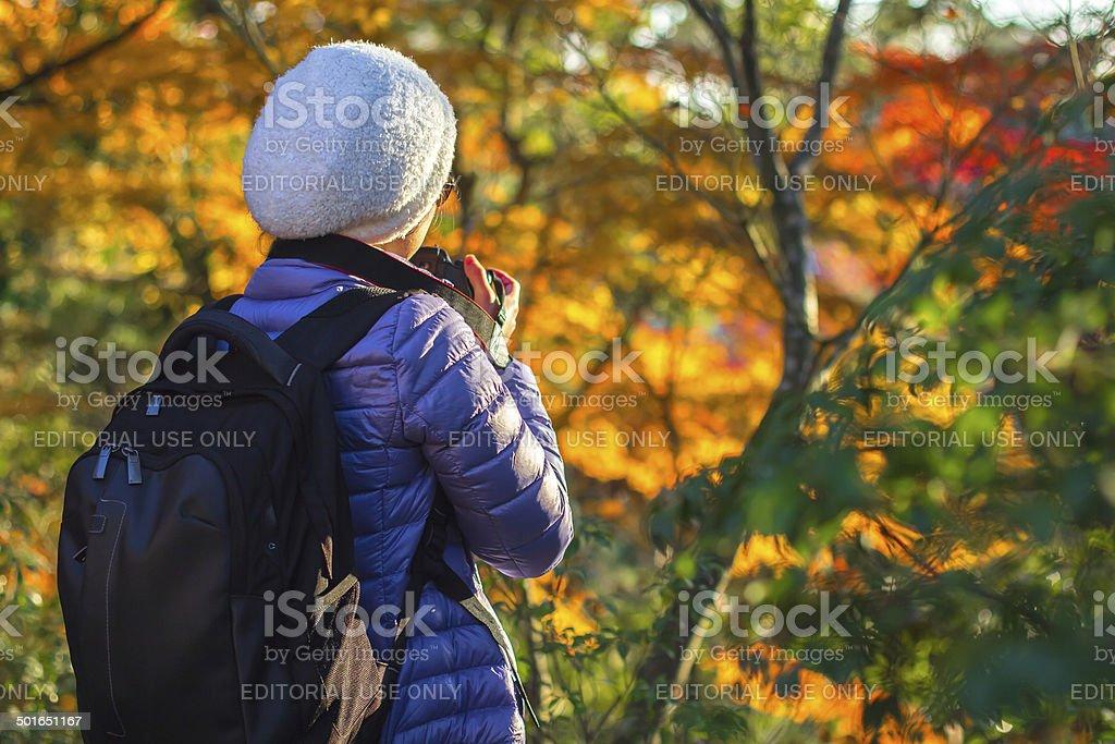 Viaggiatore con Foresta d'autunno su sfondo di Kyoto, Giappone - foto stock