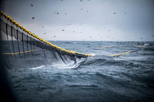 Trawl industrial fishing net