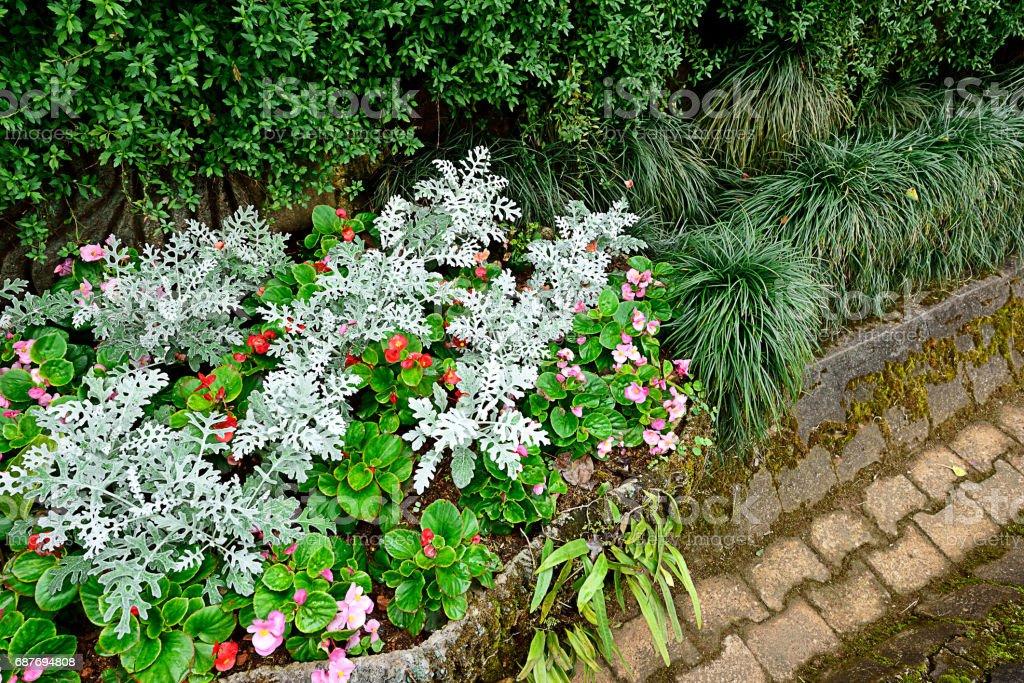 Tray garden stock photo