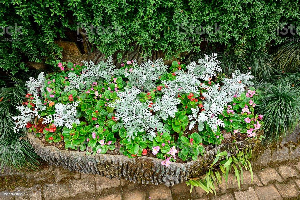 Tray gardening stock photo