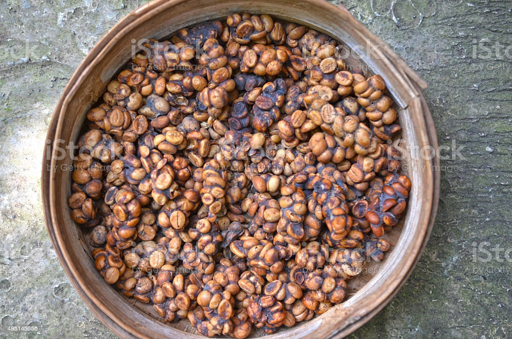 Tray of luwak poo containing digested coffee beans stock photo