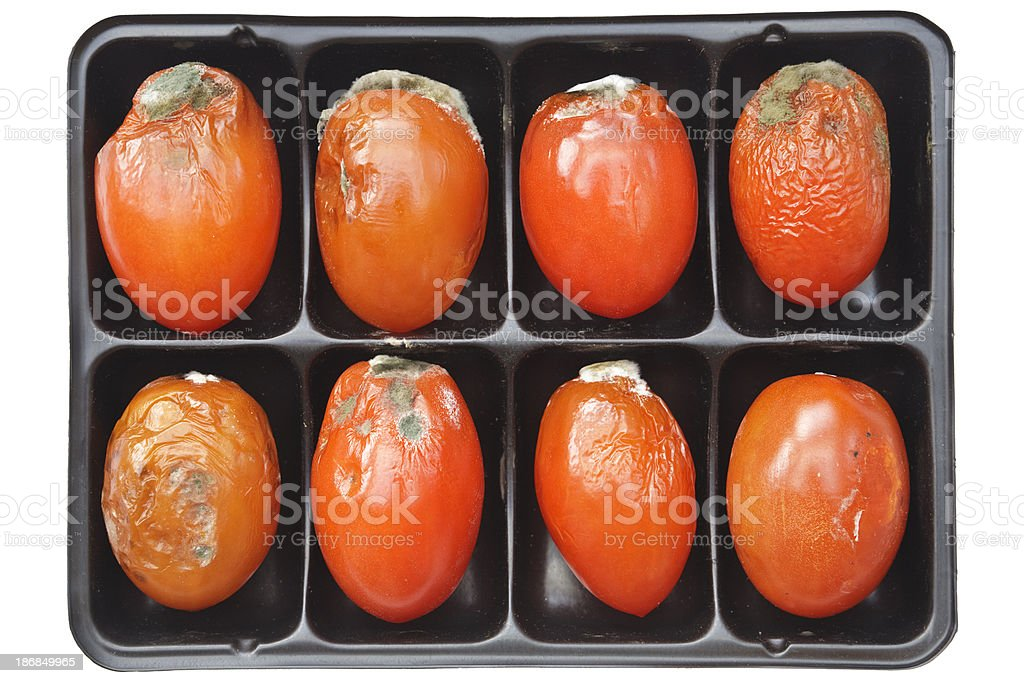 Tray of moldy tomatoes isolated on white royalty-free stock photo