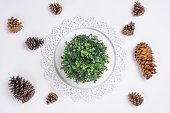 istock Tray with Pine Cones and Plant Flat Lay Top View 946581426
