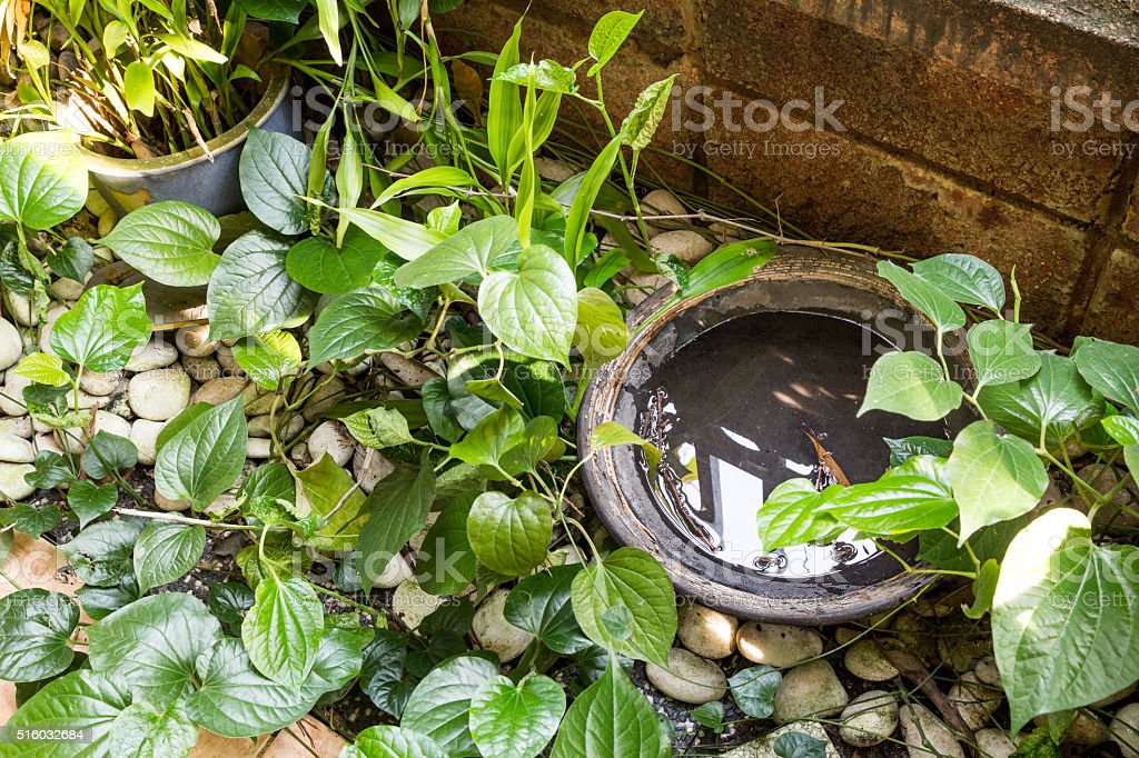 Trays stores stagnant water and breeding ground for mosquito stock photo
