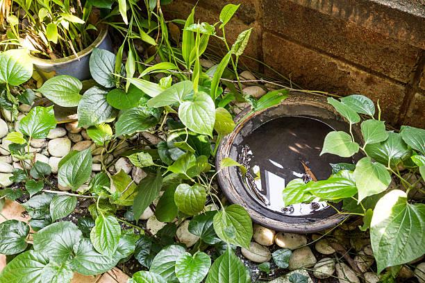 Tabletts speichert stagnierende Wasser und Nährboden für Moskito – Foto