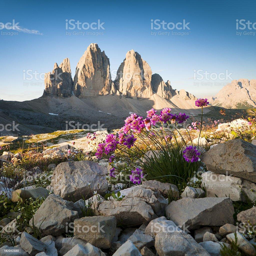 Tre Cime di Lavaredo and wildflowers stock photo