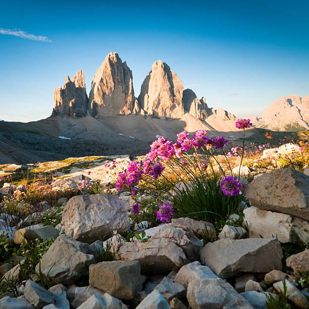 Tre Cime di Lavaredo and wildflowers