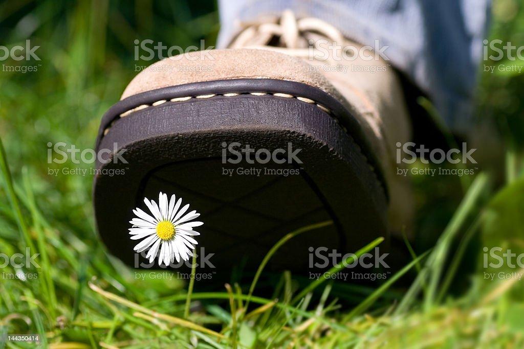 Treading on a daisy royalty-free stock photo