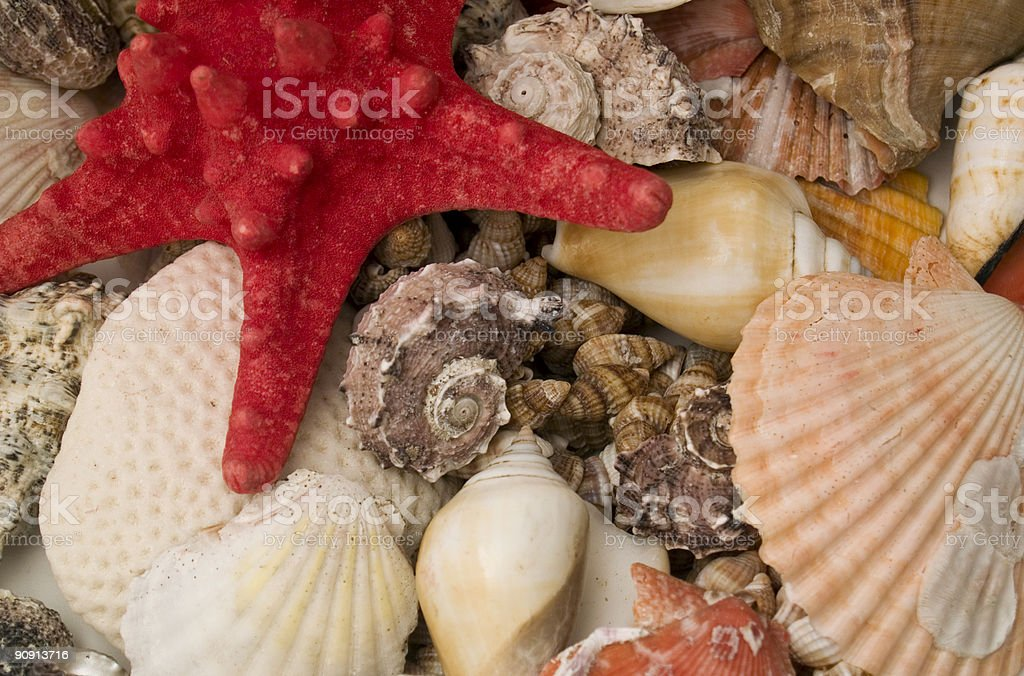 Treasure from the Ocean royalty-free stock photo