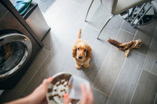 treat time for cute pup - dog food imagens e fotografias de stock
