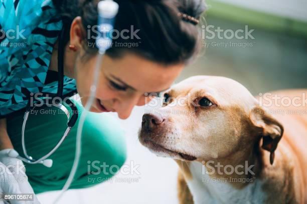 Treating a dog picture id896105674?b=1&k=6&m=896105674&s=612x612&h=gyqspdpfethnh3luawcw4m97efqdoeyrir bkj0ofqo=