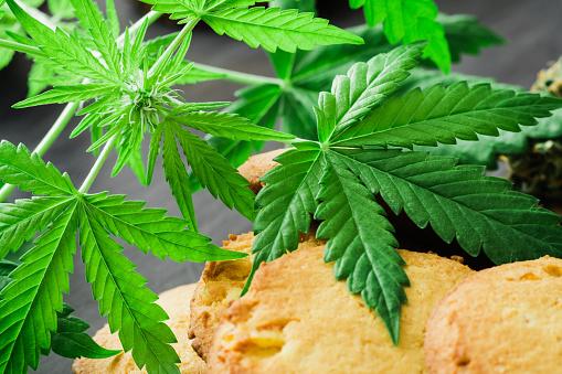 Behandeling Van Medische Marihuana Bladeren Van Cannabis Met Cookies Cannabis En Toppen Van Marihuana Stockfoto en meer beelden van Biologisch