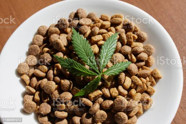 Treats for dogs and cats and green leaves of cannabis cbd and medical picture id1153491012?b=1&k=6&m=1153491012&s=612x612&h=4dxbq2rertfja7k1glt75wjqdriubovzgnirqxoebn0=