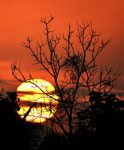 Tree ablaze A view of beautiful sunset from kerala ! ablaze stock pictures, royalty-free photos & images