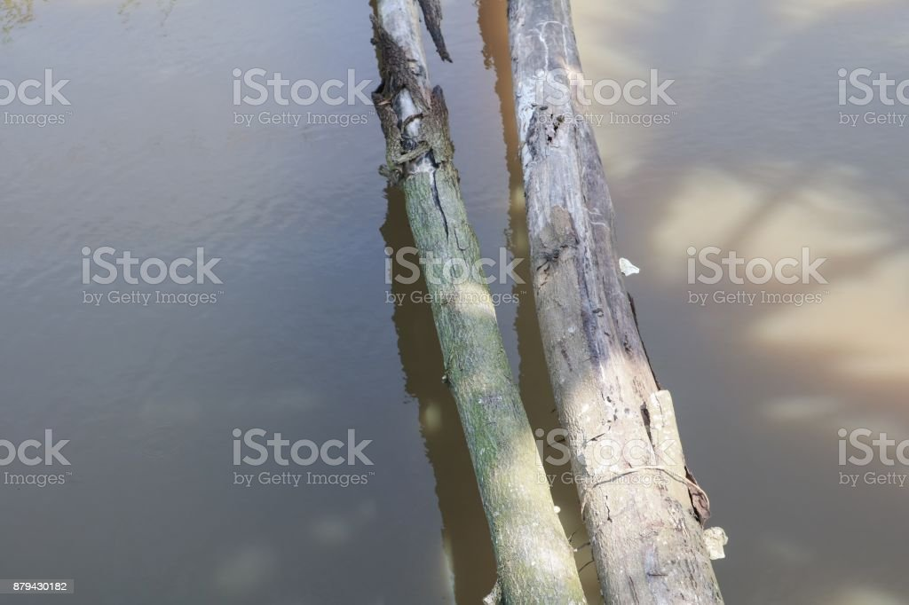 tree across Closeup river stock photo